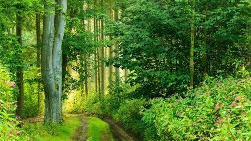 Fernwanderwege in Deutschland: Diese sieben Routen sollten Sie gesehen haben