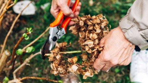 Diese Pflanzen müssen Sie im Herbst nicht zurückschneiden