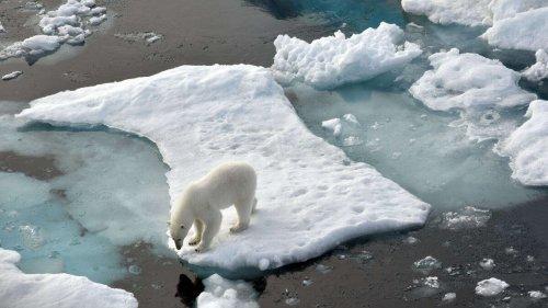 Eisschmelze in der Arktis nimmt immer weiter zu - Forscher zeigen fatale Folgen auf