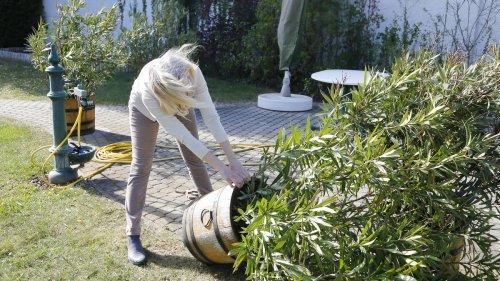Garten sturmsicher machen: So schützen Sie Ihre Pflanzen und Utensilien