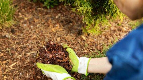 Garten mulchen: So geht es richtig mit Rindenmulch und Rasenschnitt