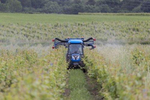 Exposition aux pesticides : en Charente, Phyto-victimes salue le lancement d'une étude nationale dans les vignobles