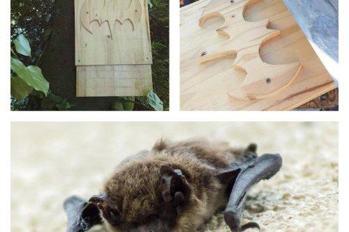 Jardinage : fabriquez un refuge pour les chauves-souris menacées de disparition