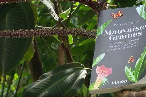 """Livre : """"Mauvaises Graines"""", la surprenante histoire des plantes qui piquent, qui brûlent et qui tuent"""