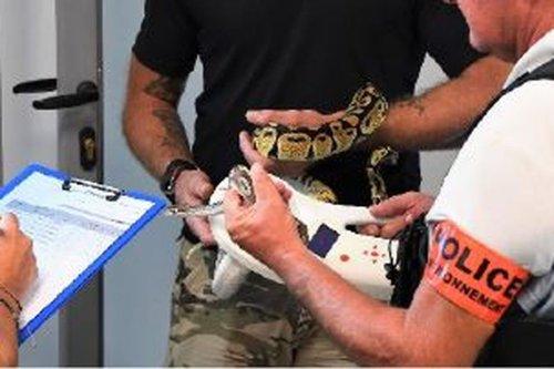 Saisie de 283 reptiles chez un groupe de personnes se livrant à une activité illégale en Guadeloupe et en Martinique - Guadeloupe la 1ère