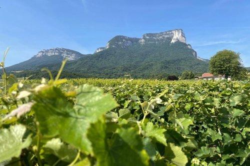 Isère : le mont Granier placé sous surveillance renforcée, une partie du massif pourrait s'écrouler