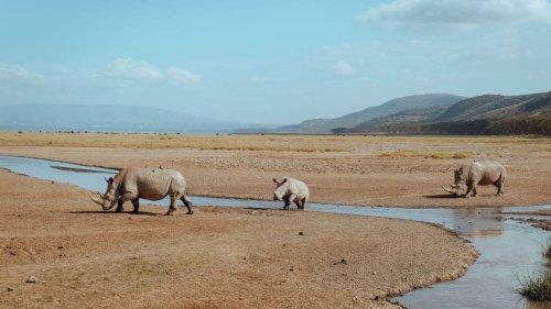 Pour la première fois, le Kenya recense sa faune sauvage, victime de décennies de braconnage et du réchauffement climatique