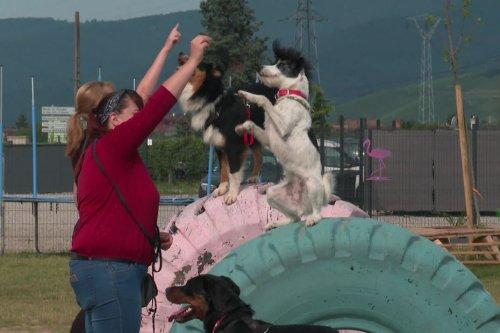VIDEO. Haut-Rhin : Doogo club, un parc de loisirs pour chiens de 3.000 m² à Ingersheim