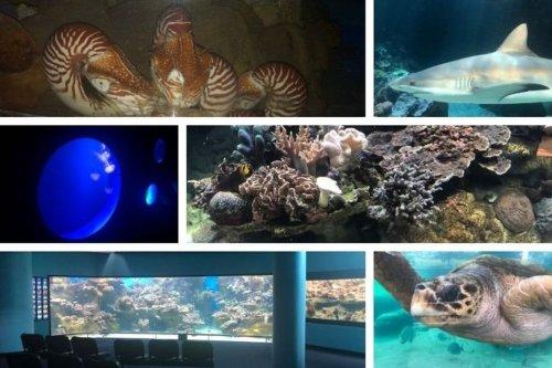 La Calédonie s'apprête à se replonger dans son aquarium - Nouvelle-Calédonie la 1ère