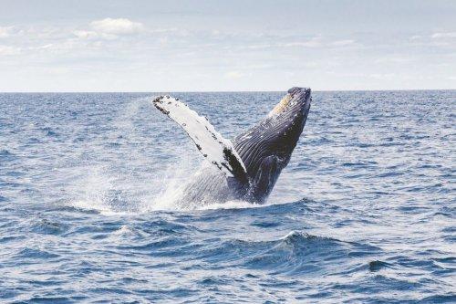 Landes : une baleine à bosse observée depuis la plage de Seignosse