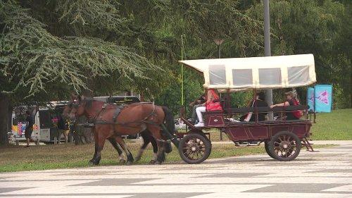 À Grenoble, une rentrée insolite en calèche pour faire découvrir le campus de manière ludique