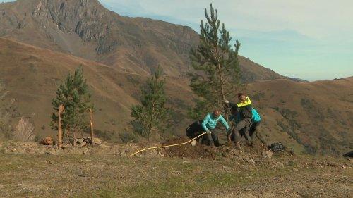 Dans les Pyrénées, la station de Saint-Lary lance une campagne de reboisement sur son domaine skiable