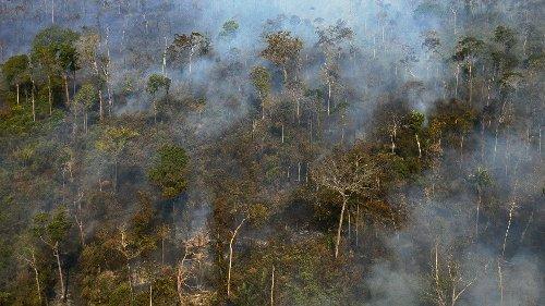 Le Brésil affirme pouvoir réduire la déforestation illégale avec une aide internationale d'un milliard de dollars