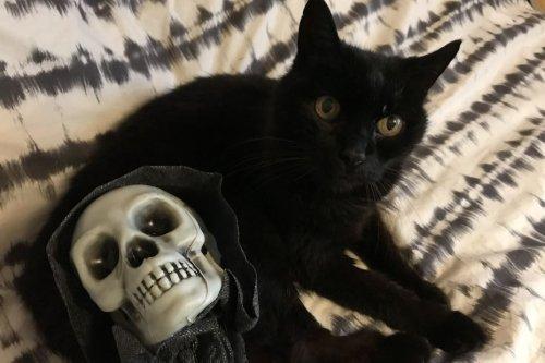 Nantes : pour Halloween, adoptez un chat noir !