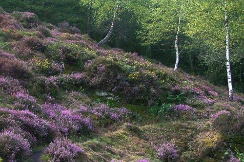 Crozant : un parcours découverte sur les vertus des arbres à l'arboretum de la Sédelle