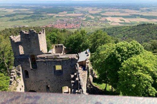 Alsace - nos plus belles randonnées : à la découverte du château du Bernstein sur les hauteurs de Dambach-la-Ville