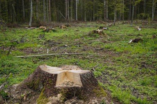 Haute-Marne : l'abattage d'une forêt fait polémique, une habitante lance une pétition pour sauver le bois communal