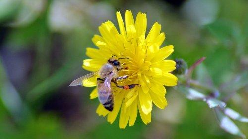 Environnement : une étude sur plus de 1 000 espèces de fleurs montre que la moitié d'entre elles est menacée