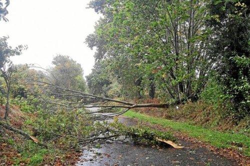 Tempête Aurore : en Bourgogne, le département de l'Yonne le plus touché par les dégâts