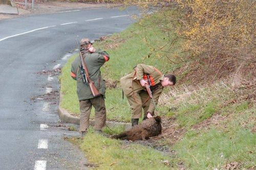 Ouverture de la chasse en Normandie : les chasseurs du Calvados sont inquiets