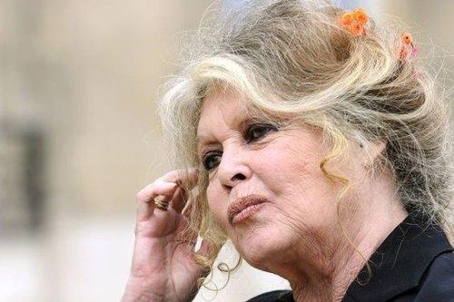 A La Réunion, le choix de la Fondation Brigitte Bardot sur l'errance animale passe mal - Outre-mer la 1ère