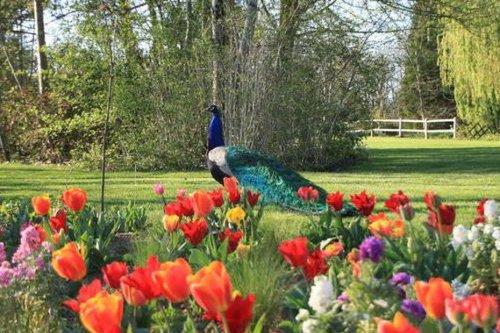 CARTE. Occitanie : découvrez les plus beaux jardins ouverts au public du 4 au 6 juin