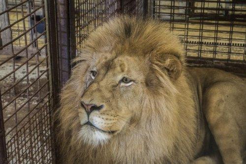 Maltraitance animale : après la commission mixte paritaire, le soulagement des défenseurs de la cause animale