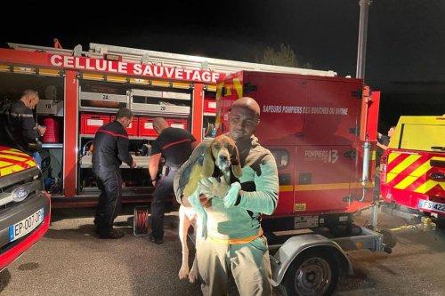 Saint-Rémy-de-Provence : une chienne de chasse secourue par les pompiers