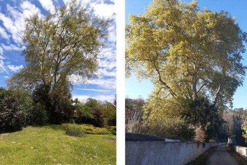 Un arbre posé sur un testament en Lorraine : les droits des arbres en marche
