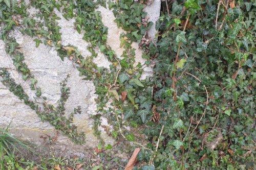 À Saint Amand-Montrond, les habitants vont devoir désherber leurs trottoirs ou payer la facture