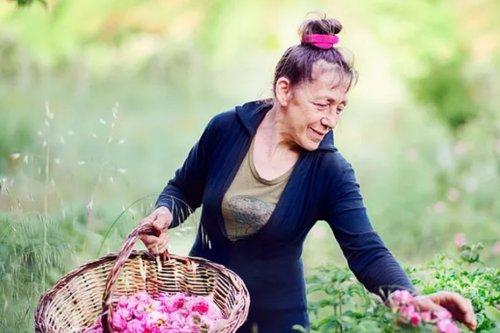 A Fontaine-de-Vaucluse Roseline Giorgis crée des parfums avec les roses qu'elle cultive : une paysanne au parfum