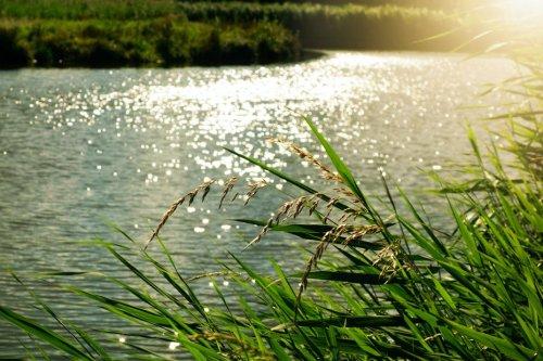 Indre : Rosobren crée un plastique végétal écologique et biodégradable fait à partir de roseau