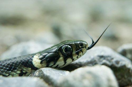 Ardennes : elle trouve un serpent pendant qu'elle conduit... voici ce qu'il faut faire si cela vous arrive