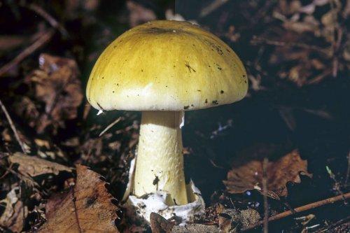 """Explosion du nombre d'intoxications par des champignons : """"ne vous fiez pas aux applications d'identification sur les smartphones"""""""
