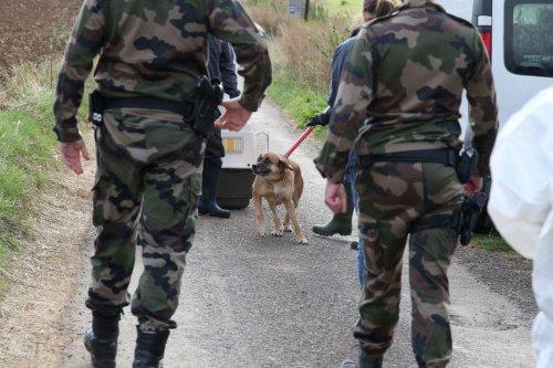 Loiret : près de 150 animaux saisis, un exploitant agricole en garde à vue pour mauvais traitements