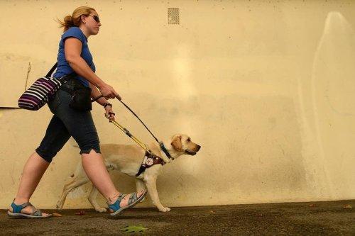 Dans le Var et les Alpes-Maritimes, on vous explique comment devenir la famille d'accueil d'un chien guide