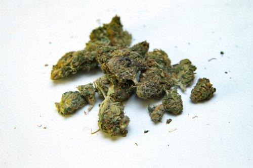 """Cannabis : """"A force de ne pas s'occuper de la question, on se retrouve avec des aberrations"""""""