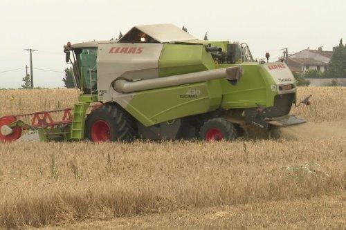 Aude : les producteurs de blé victimes de la sécheresse et du gel terminent la moisson
