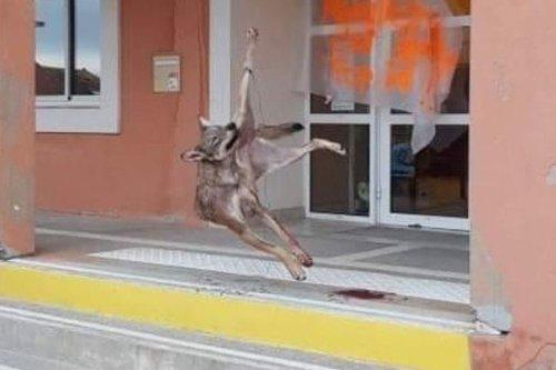 Hautes-Alpes : une louve retrouvée pendue devant la mairie de Saint-Bonnet-en-Champsaur
