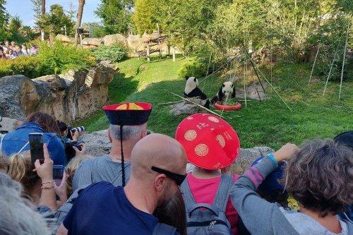 Pass sanitaire : mis à part Beauval, les zoos et parcs du Centre-Val de Loire constatent une baisse de fréquentation