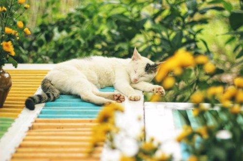 La mairie d'Egletons gère ses chats errants : pour vivre heureux vivons castrés