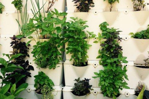 Jardinage: des plantes aromatiques dans la cuisine pour tout l'hiver