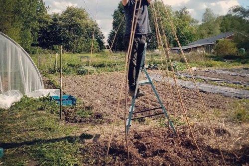 """Jardinage. """"Ça pousse tout seul sans pesticide"""" : dans le potager de ce maraîcher à Houlle, le sol travaille pour lui"""