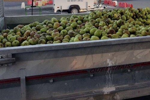 Mayenne : un pressoir à pommes itinérant à Evron pour éviter le gaspillage