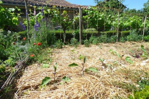 Comment irriguer son jardin potager à l'approche de l'été et des fortes chaleurs