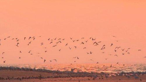 Vendée : le bal des oiseaux migrateurs