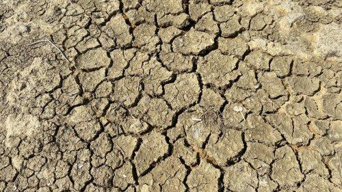 Les premiers effets de la sécheresse sont attendus d'ici la fin juin, principalement dans l'est de la France