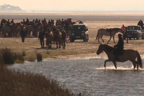 La Trans'Henson, un spectacle au cœur de la Baie de Somme, à cheval entre la terre et la mer