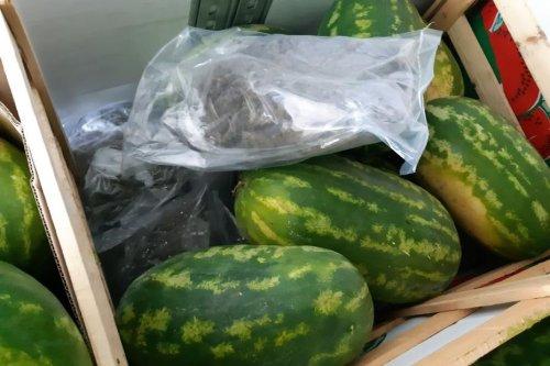 Lyon : le chargement de pastèques cachait 403 kg de cannabis
