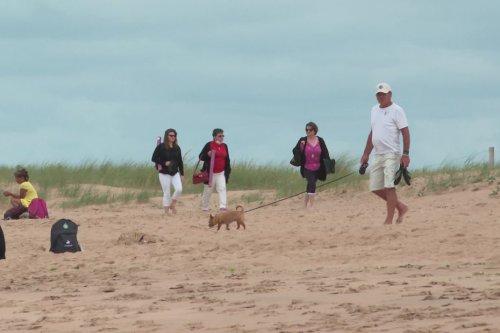 """Vendée : ces plages et campings """"dogs friendly"""" qui accueillent les chiens en période estivale"""